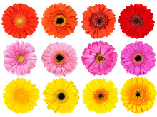 Collection Of Fresh Gerbera Fl...