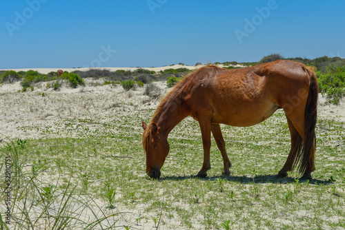 spanish mustang wild horse on the dunes in north carolina Plakát