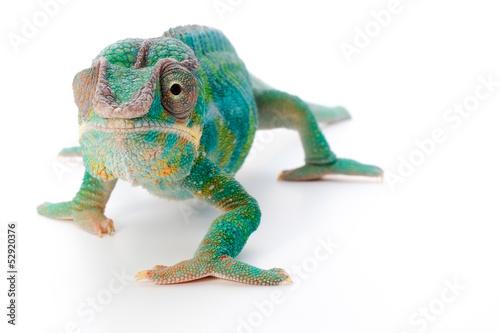 Tuinposter Kameleon pantherchamäleon 3