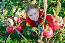 Young Girl Picking Organic App...