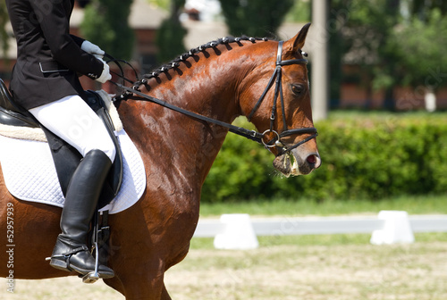 La pose en embrasure Equitation Dressage horse and rider