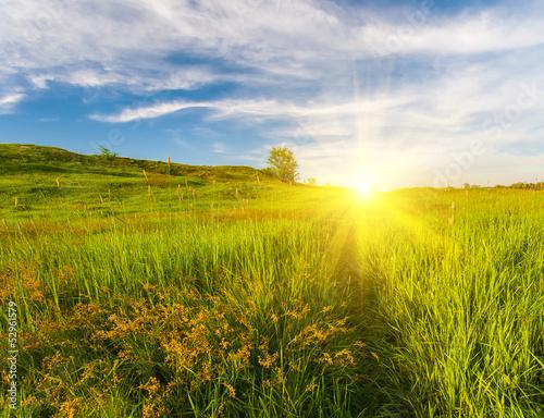 Foto auf Gartenposter Landschappen Meadow with green grass and blue sky