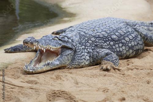 Fotografie, Obraz  Krokodilmaul