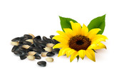 Background with a yellow sunflower and sunflower seeds. Vector
