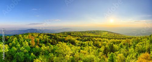 Foto auf Gartenposter Wald Spring landscape with fresh green forest