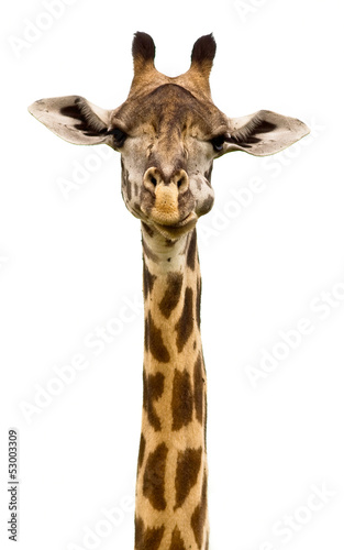 Spoed Foto op Canvas Giraffe Giraffe head Isolated