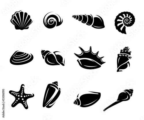 Fotografía  Seashells set. Vector