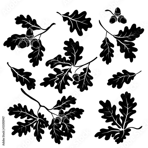 Fototapeta Oak branches with acorns, silhouettes