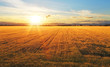 canvas print picture - Sunset over wheat field.