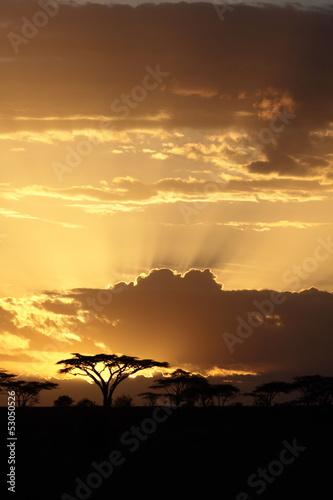 Obraz premium Afrykański zachód słońca z akacją