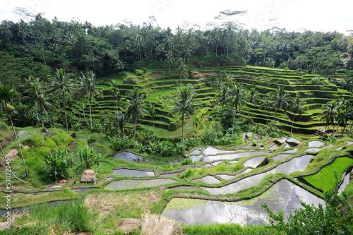 In de dag Indonesië Risaie vicino a Ubud sull'isola di Bali