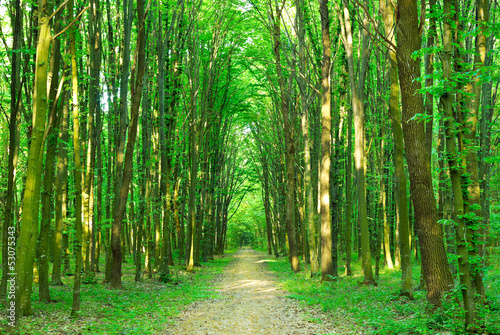 Deurstickers Bossen Green trees Sunny day in the forest