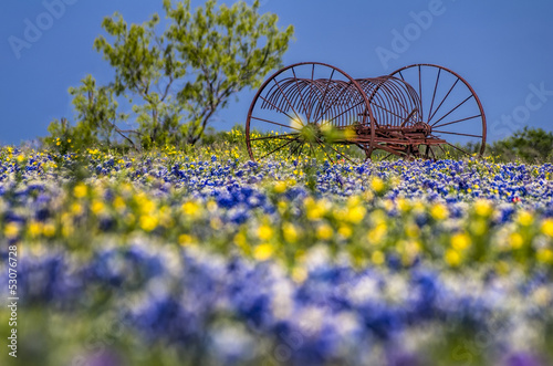 Poster Texas Antique farm equipment in a field of bluebonnets