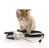 kitten with a stethoscope. isolated on white background