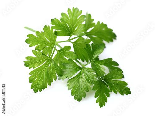 Fototapeta Fresh parsley obraz