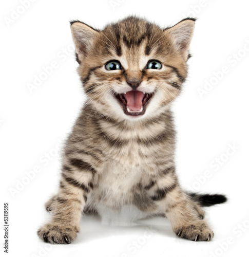 Valokuva beautiful cute little kitten meowing and smiling