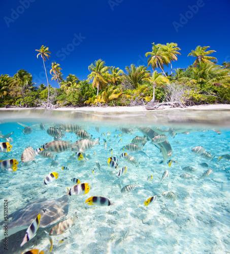 Naklejka na szybę Tropical island