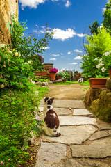 Fototapeta Uliczki Two cats in ancient garden