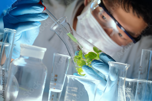 Fotografía  Scientist examining samples with plants
