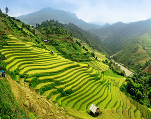 Obraz na PlexiRice fields Mu Cang Chai, Vietnam