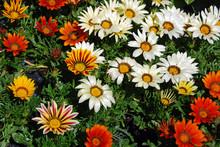 Treasure Flowers