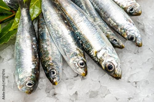 Papiers peints Poisson Fresh sardines on ice.