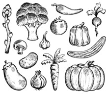 Vegetable Theme Collection 2