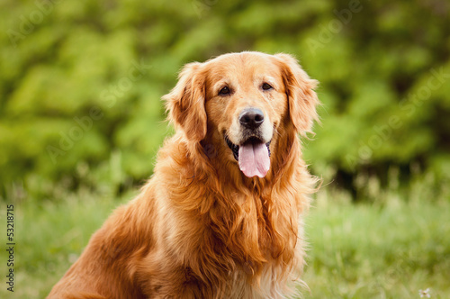 Foto op Plexiglas Hond Portrait of a dog