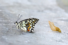 Butterfly Baby On Floor