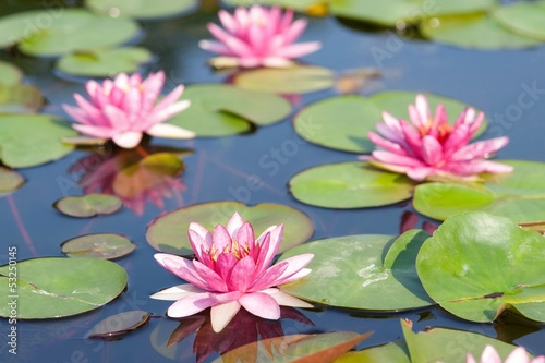 Poster de jardin Nénuphars Lotus in the pond