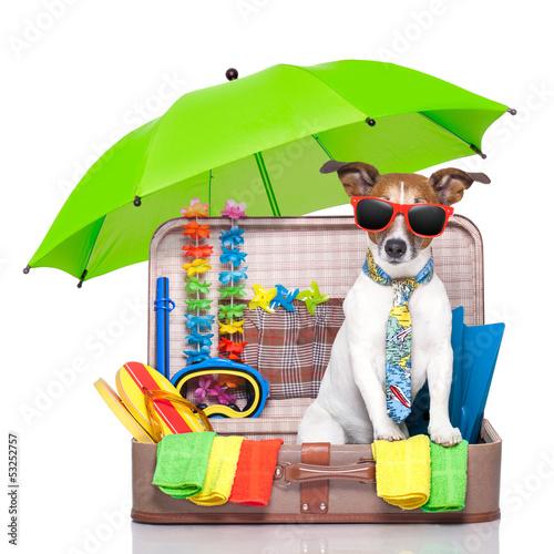 Plakat na zamówienie summer holiday dog