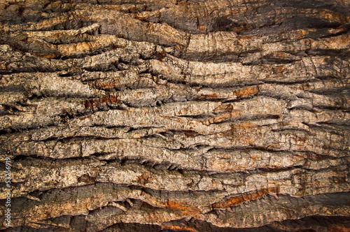 Fotografía  bark of an old oak