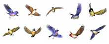 Set Of Finch Birds - 3D Render