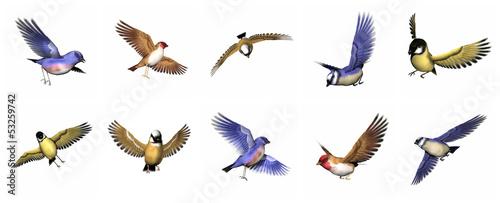 Photographie Set of finch birds - 3D render