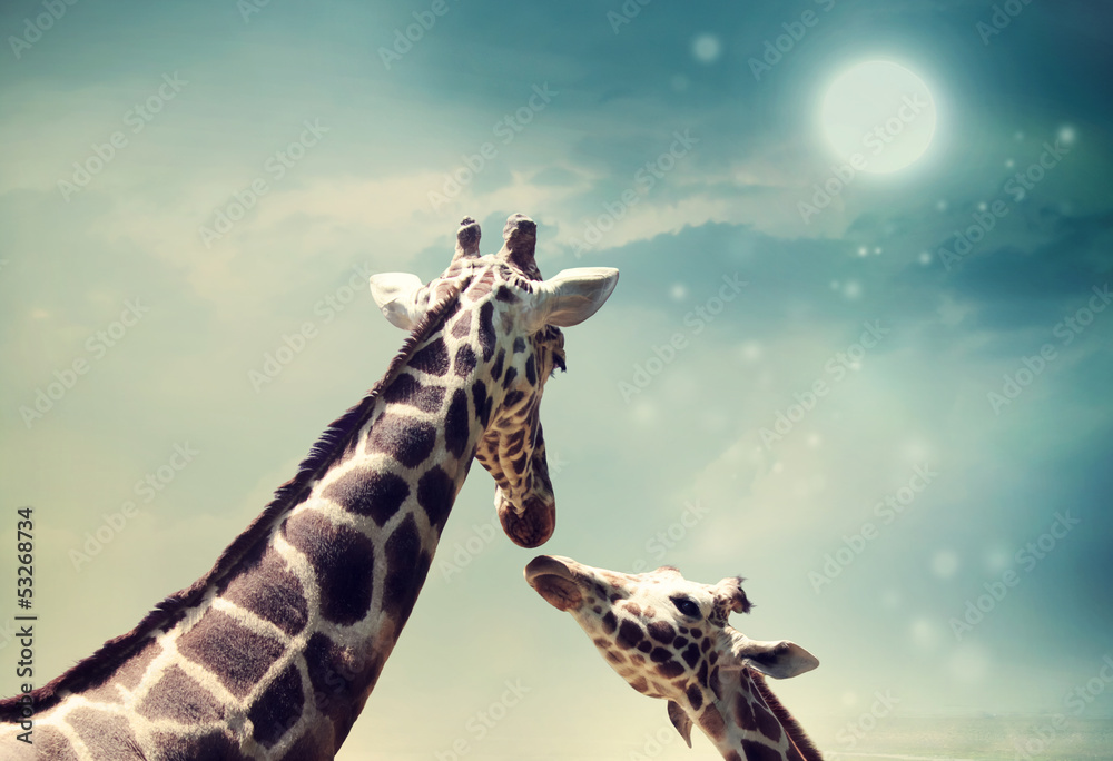 Giraffes in friendship or love concept image