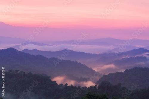 Wall Murals Light pink Beautiful twilight landscape in rain forest.