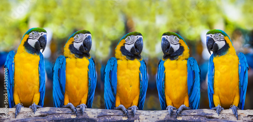 Foto op Plexiglas Papegaai macaws sitting on log.