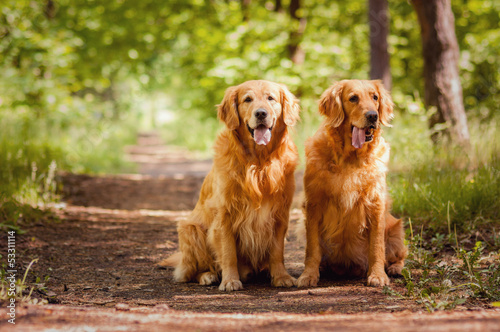 Photographie  Portrait of a two  dogs