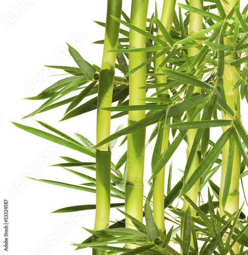 bambusowe-szczescie