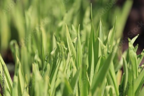 Frische Blätter in voller grüner Schönheit