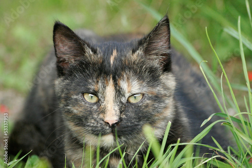 Canvas Prints Cat Cat in a grass
