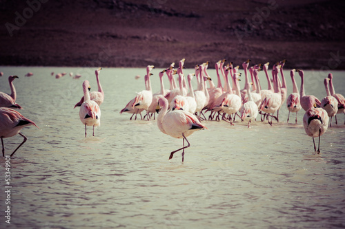 Foto op Aluminium Flamingo Vintage Flamingos on lake in Andes, the southern part of Bolivia