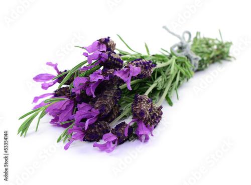 Garden Poster Lavender Blumen, Lavendel