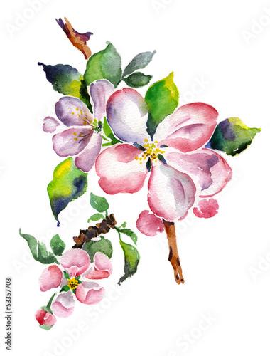 akwarela-kwitnacy-galaz-jablka