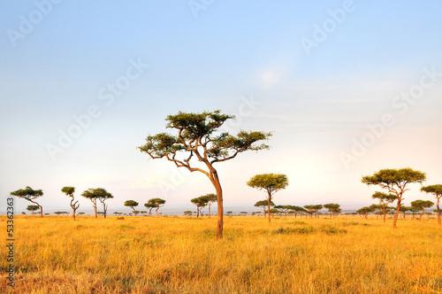 Türaufkleber Afrika Acacia Tree