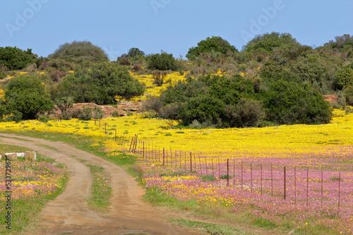 Foto op Plexiglas Zuid Afrika Wild flower landscape, Namaqualand