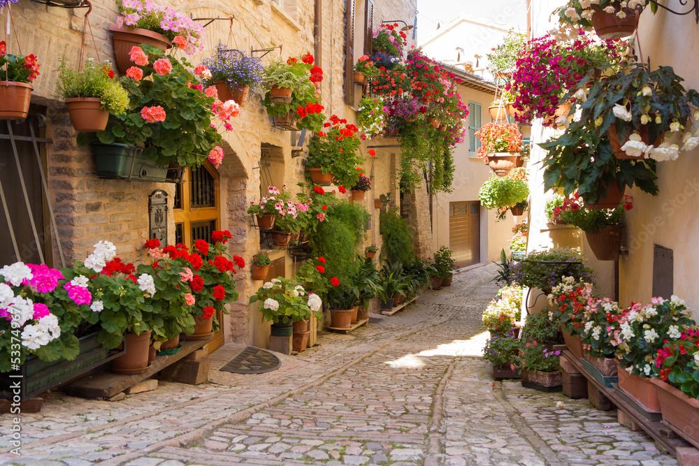 Fototapeta Vicolo con fiori, Spello