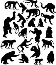 Twenty Two Black Isolated Monkey Silhouettes