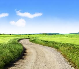paisaje de campos verdes y camino