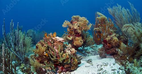 Poster Sous-marin Underwater coral reef Roatan